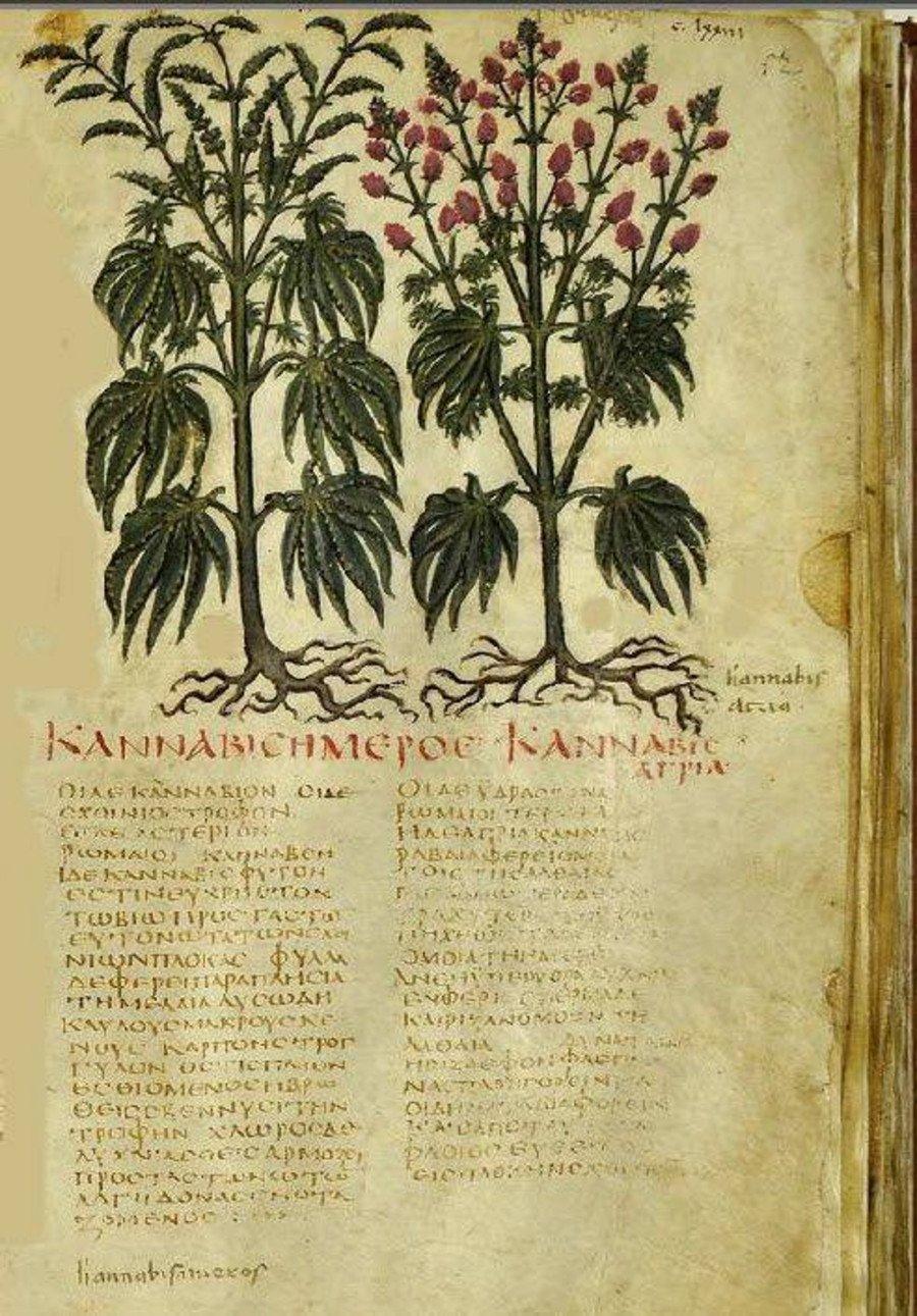 El cannabis en la antigua Grecia 29